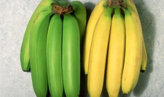 UNRIPE PLANTAIN, A REMEDY TO DIFFERENT HEALTH CONDITIONS
