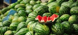 WHAT YOU DO NOT KNOW ABOUT WATERMELON
